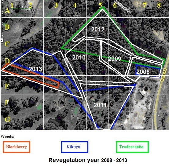 site map with weeds, grid and year planned for revegetation